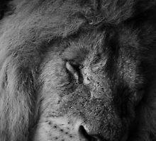 Lion by Richard Hepworth