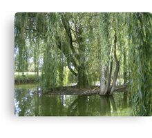 Through The Willow Curtain Canvas Print