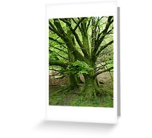 Green…peace     by Denise Sallee Greeting Card