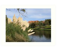 Pampas Grass & The River Torrens through the C.B.D. Adelaide. Sth. Aust. Art Print
