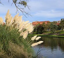 Pampas Grass & The River Torrens through the C.B.D. Adelaide. Sth. Aust. by Rita Blom