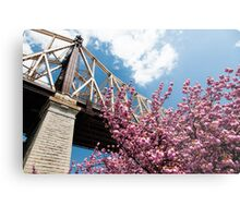 Cherry Blossoms Under the Queensborough Bridge Metal Print