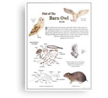 Diet of the Barn Owl Metal Print