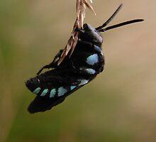 Cuckoo bee by Roselene