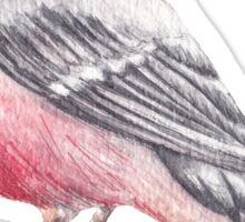 Bird. Bullfinch Sticker