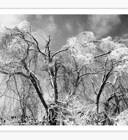 trees wear winter Sticker