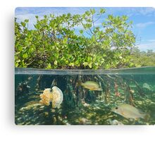Mangrove half and half with fish and jellyfish Metal Print