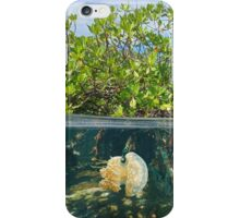 Mangrove half and half with fish and jellyfish iPhone Case/Skin