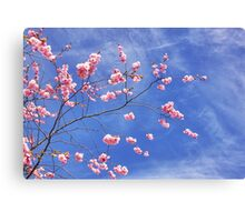 Cherry on top Canvas Print