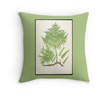 Ferns of Great Britain 2 (19th Century) Throw Pillow