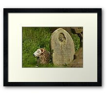 Sleepy Sheep Framed Print