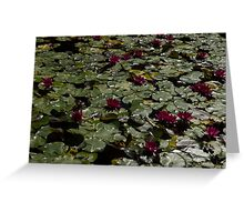 Abundance In Crimson  Greeting Card