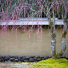 Ichijodani Sakura by Sam Ryan