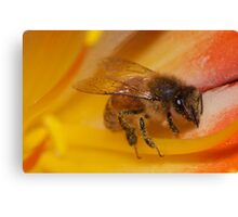 Bee on a yellow flower 2 Canvas Print