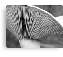 Saffron gills (black/white) Canvas Print