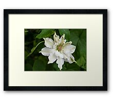 Refreshed by the Rain Framed Print
