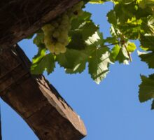 Blue Sky Grape Harvest - Thinking of Fine Wine Sticker
