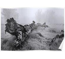 Foggy Deadfall BW Poster