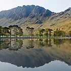 Haystacks and the Buttermere Pines by Martin Lawrence