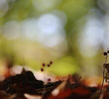Forest Nymphs by out-of-focus
