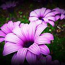 Purple Beauty by EdsMum