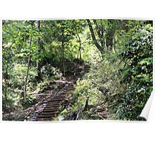 Stairs in the woods Poster