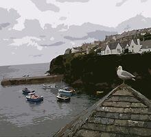 Port Isaac Seagull by RachelMacht