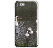 Swan and their beautiful cygnets iPhone Case/Skin