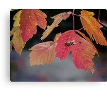 Autumn Foliage in Australia 2 Canvas Print