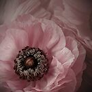 Pink by EbyArts