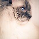 Savannah by ╰⊰✿Sue✿⊱╮ Nueckel