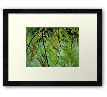 Autumn Foliage in Australia 3 Framed Print