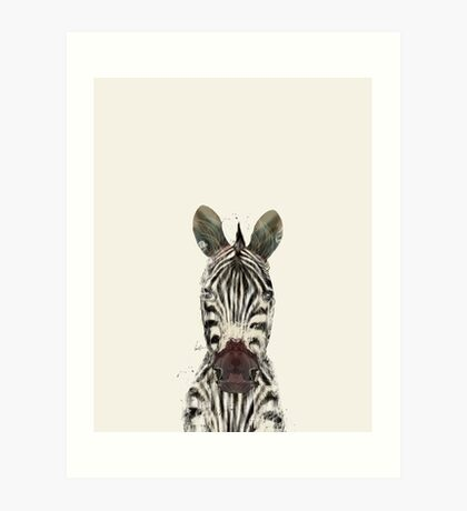 little zebra Art Print