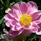In the Pink Peony by Monnie Ryan