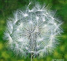 Acrylic painting, Dandelion Seedhead botanical art by Marion Yeo