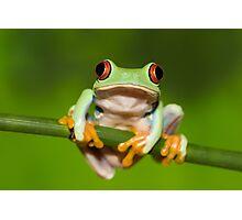 animal Photographic Print