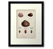 Proceedings of the Zoological Society of London 1848 - 1860 V5 Mollusca 016 Framed Print
