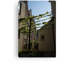 Any Space Can Be a Garden - Creative Urban Gardening From Amsterdam Canvas Print