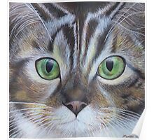 Cat's face close up Poster