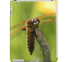 Four-spotted Chaser iPad Case/Skin