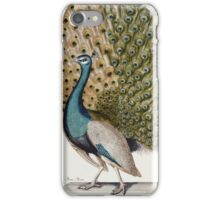 Johann Leonhard Frisch - Male Peacock In Full Display. Bird painting: cute fowl, fly, wings,  peahen, pets, wild life, green peafowl, birds, Peafowl, bird, nature iPhone Case/Skin