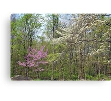 Springtime In The Woods Canvas Print