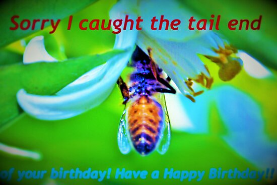 Bee-lated birthday greeting by ?? B. Randi Bailey