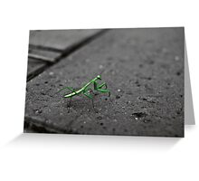 camouflage/signal Greeting Card