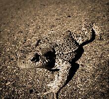 lucky toad x-ing road by Nikdolai W. Dawson funke