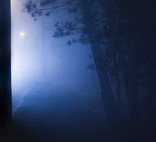 Fog. by Leo Ion