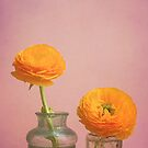 Yellow Flowers in Vintage Vases by Olivia Joy StClaire