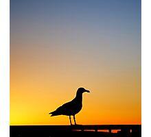 Sea Gull Sunset Photographic Print