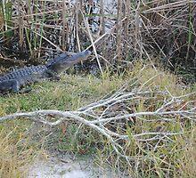 Desolate Area Alligator by smileychikk123
