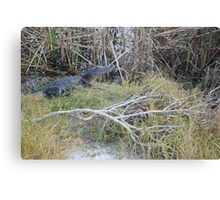 Desolate Area Alligator Canvas Print
